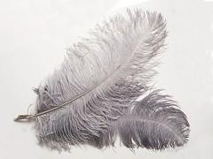 Šedé veliké pštrosí pero přírodní šedé  40-50cm, á. 1ks