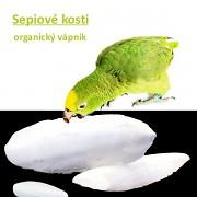 Sepiová kost pro papoušky, hlemýždě, želvy, 1ks