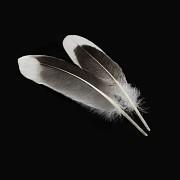 BÍLÉ /ČERNÉ peří husí letky brka dekorační pírka bíločerné