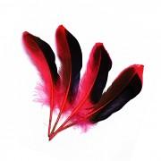 ČERVENÉ / ČERNÉ peří husí letky brka dekorační pírka červenočerné