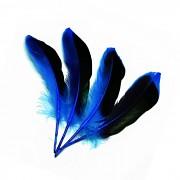 MODRÉ / ČERNÉ peří husí letky brka dekorační pírka modročerné
