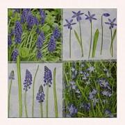 Modré květiny ubrousky s modrými květy, 1ks