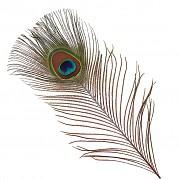 Paví peří PAVÍ péro 40 přírodní nebarvené paví pírka, bal. 1ks