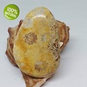 Rarita EXKLUSIVNÍ velký Fosilní KORÁL kabošon přírodní minerál šperkový kámen