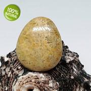 Rarita EXKLUSIVNÍ Fosilní KORÁL kabošon přírodní minerál šperkový kámen